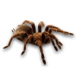 Spider Set Stickers