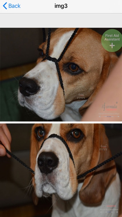 first aid for dogs K9 screenshot-8