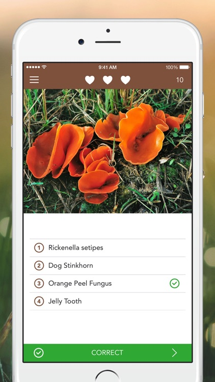 Mushrooms PRO - Hunting Safe screenshot-3