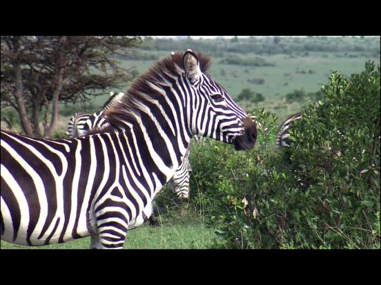 Video Touch - 野生の動物のおすすめ画像3