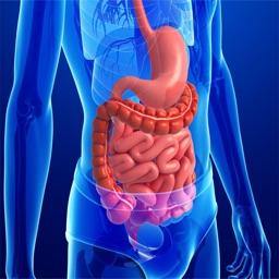 Anatomy : Digestive System