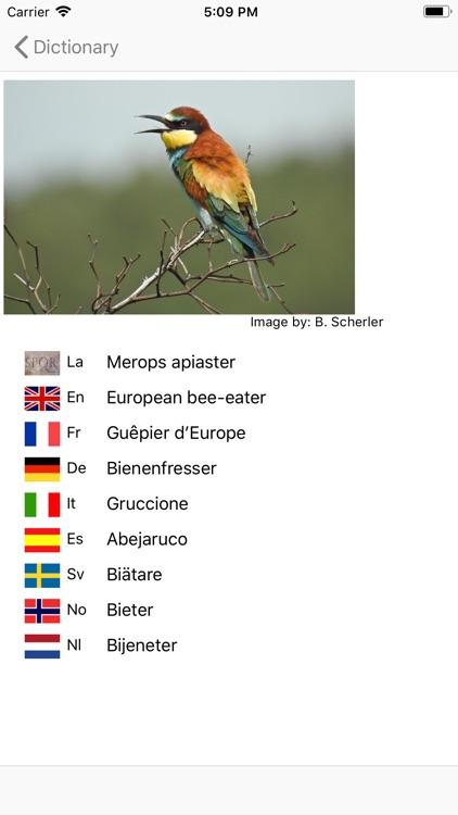 European Birds Names screenshot-4