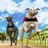 下注吧!格力犬竞赛
