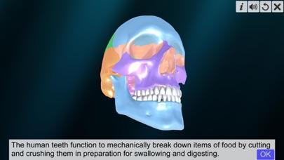 Incredible Human Teeth screenshot 1