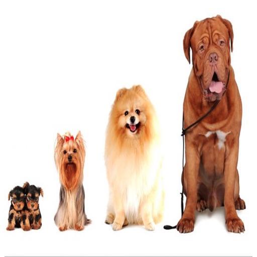 Dog Age calculator icon