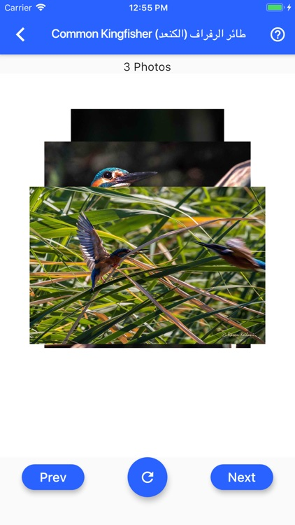Birds of Jordan screenshot-8