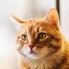猫クロスワード