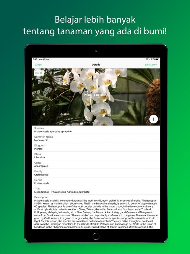 Plantsnap Identifikasi Bunga Di App Store