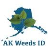 点击获取Alaska Weed ID