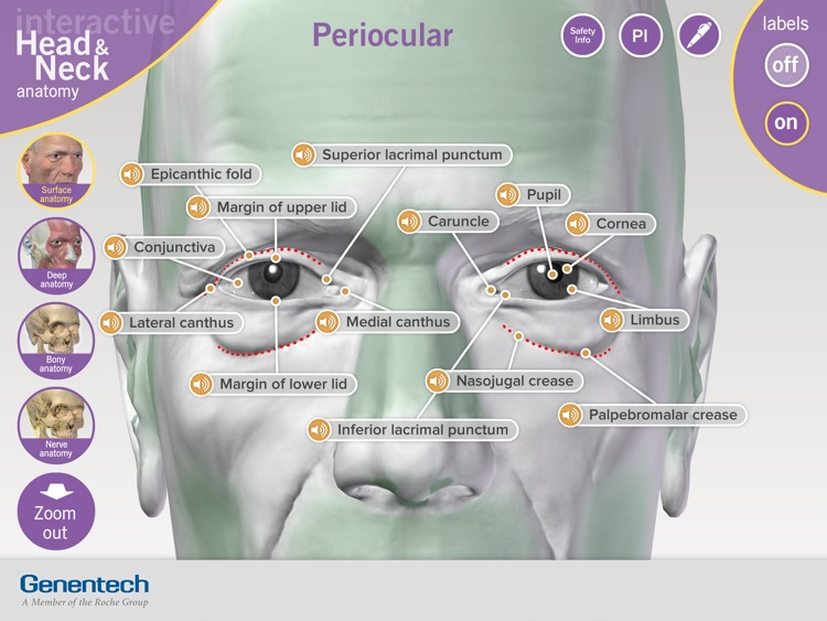 3D Facial Anatomy Tool screenshot-3