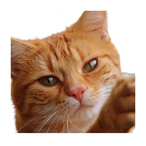 Cat photo sticker