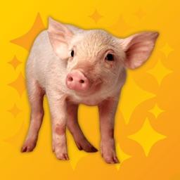 Oink Pro - Pig Sounds