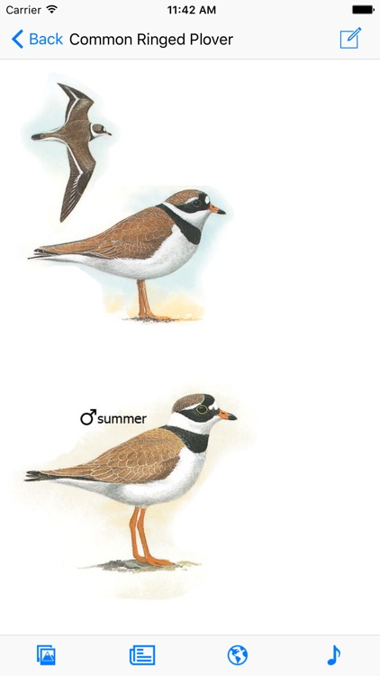 Eastern Europe Birds