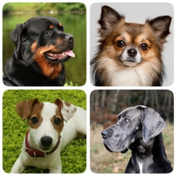 Dog Breeds Quiz - Dog Games