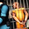 越狱逃生:监狱生存计划