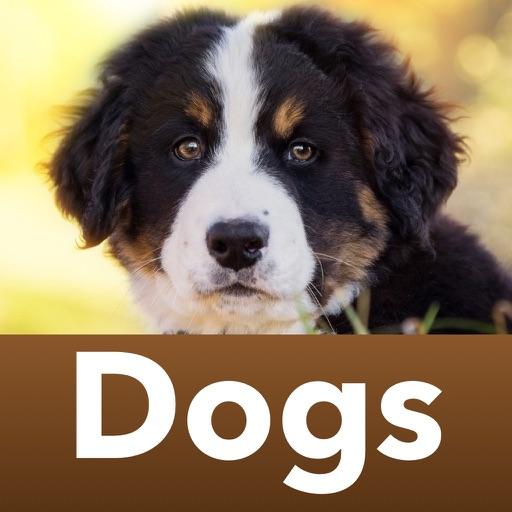 Породы собак Викторина: Собаки