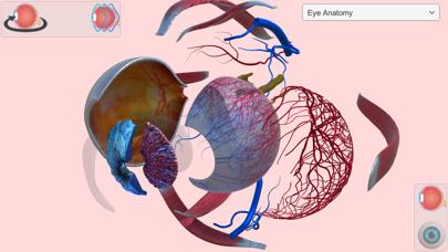 Eye Anatomy Atlas Screenshots