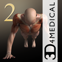 iMuscle 2 - iPhone Edition - 3D4Medical from Elsevier Cover Art