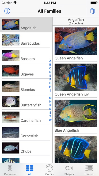 Easy Fish ID Caribbean screenshot-8