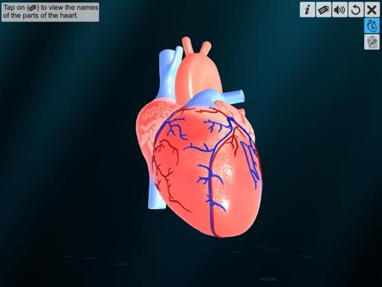 Heart - An incredible pump screenshot 8