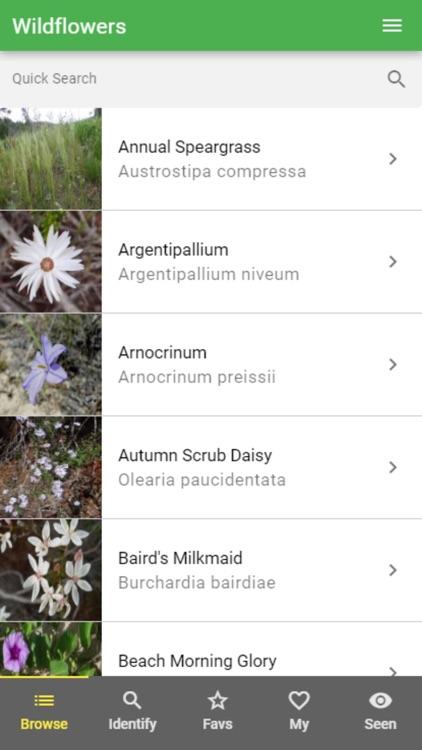 Wildflowers of WA