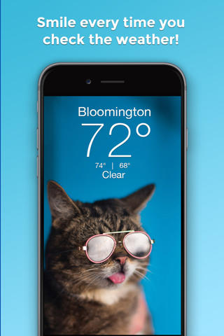 Lil BUB Cat Weather Report - náhled