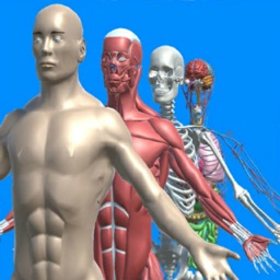 Human anatomy system & parts
