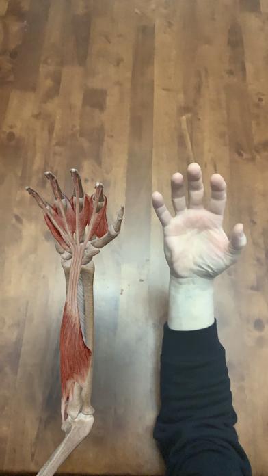 筋肉とキネシオロジー ScreenShot9