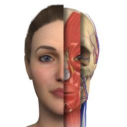 Interactive Anatomy - PT