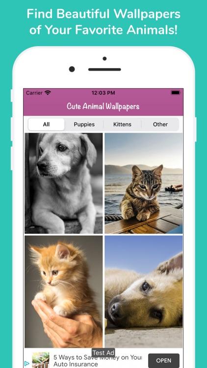 Cute Animal HD Wallpapers