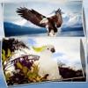 すべての鳥の壁紙