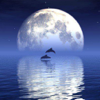 Reflection - 水に反射した画像...