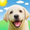 Perrito y Clima: Weather Puppy