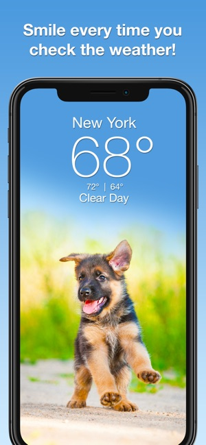 Weather Puppy Forecast Radar On The App Store