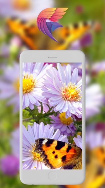 BG HD خلفيات screenshot-6