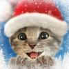 Little Kitten 小猫 - 我最喜欢的猫