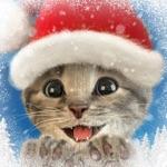 Kleine Kitten -My Favorite Cat