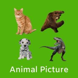 Animal Picture Identification