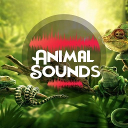 Animal Sounds 2019