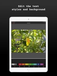 Typewriter: Typing Video Maker ipad images