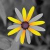 محرر الصور - تعديل الالوان - iPhoneアプリ