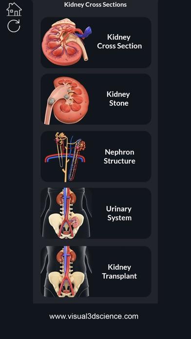My Kidney Anatomy screenshot two