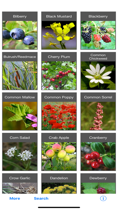 Forage - Wild Free Food for pc