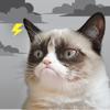 Grumpy Cat's Funny Weather - Weather Creative Inc.