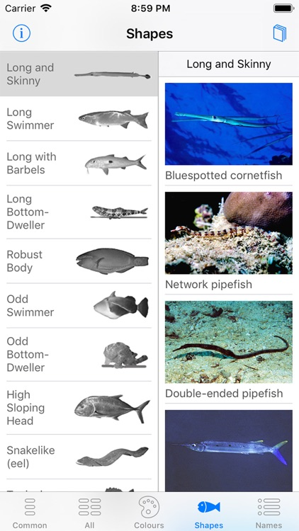 Oman Fish ID screenshot-5