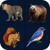 Animal Sound - Zoo Fun