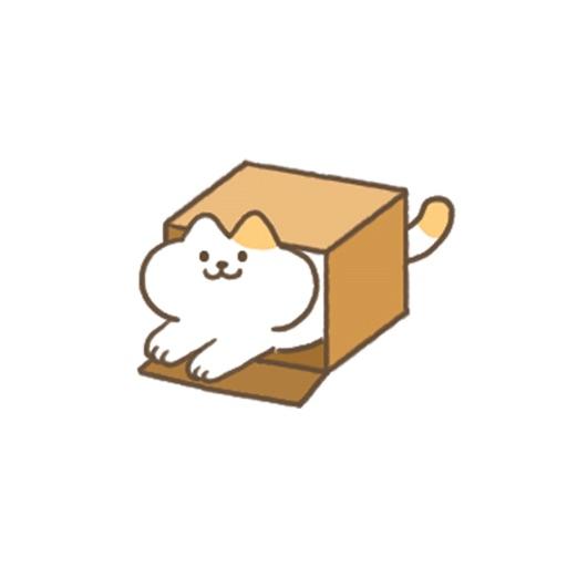 BoxCat-Come on in cat
