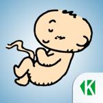 Беременность по неделям KLO на пк