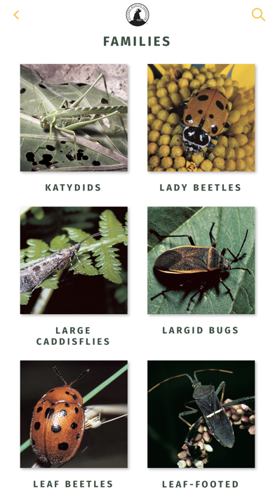 NWF Guide to Insects & Spiders 2