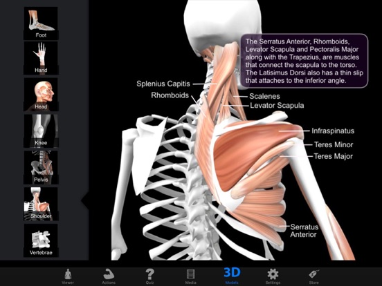 Muscle & Bone Anatomy 3Dのおすすめ画像1